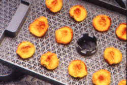 Lequip 528 Dehydrator Tray of fruits drying on mesh sheet
